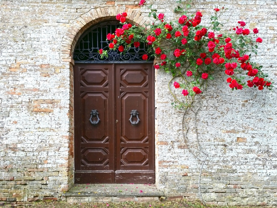 Old wooden door with red blooming roses